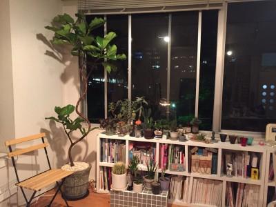 続・もし、オートクチュールのように木や植物を選ぶことができるならば….弐