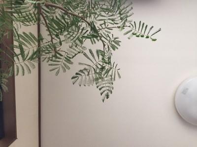 もしオートクチュールのように木と植物を選ぶことができるならば….