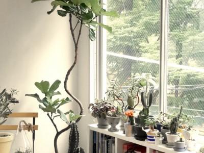 続・もし、オートクチュールのように木や植物を選ぶことができるならば….